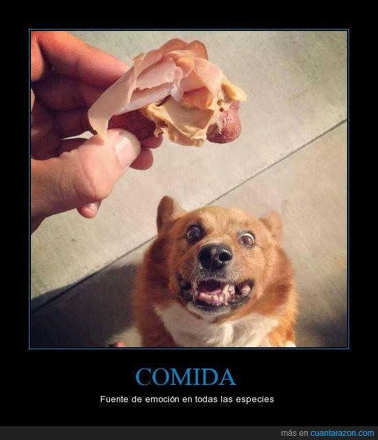 Puta ama perro en Corrientes-8123